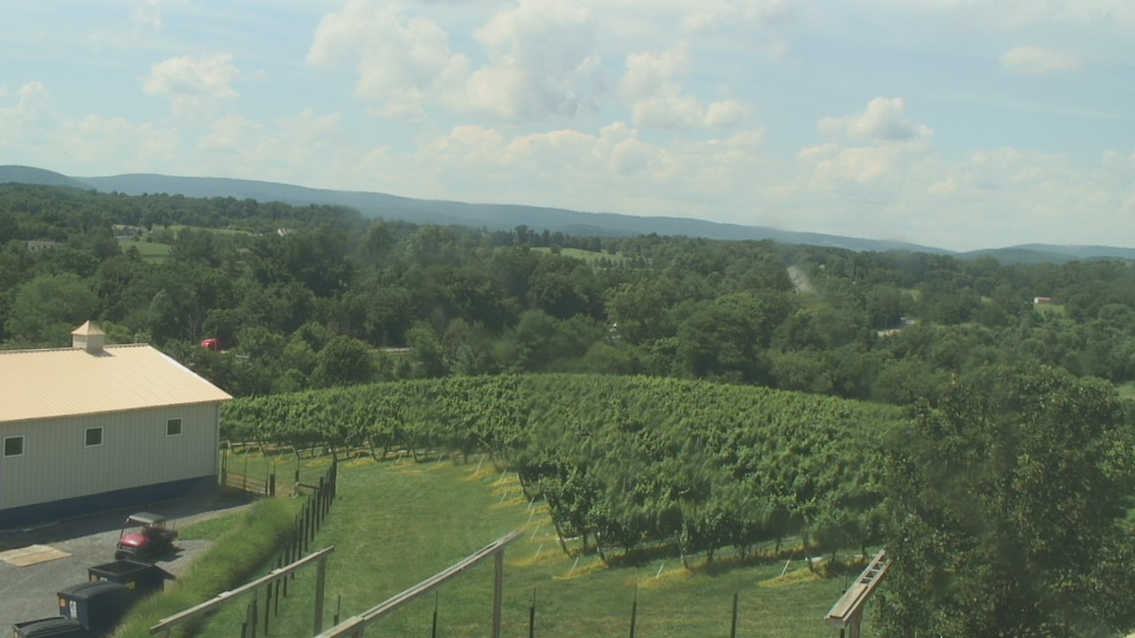 Barrel Oak Winery, Delaplane VA